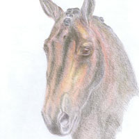 Cheval, dressage, animal, portraite, dessin, pour acheter, Claudia Luethi alias Abdelghafar, contemporain, crayon de couleur, art,