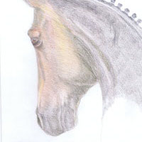 Cheval, portraite, dressage, animal, dessin, pour acheter, Claudia Luethi alias Abdelghafar, contemporain, crayon de couleur, art,